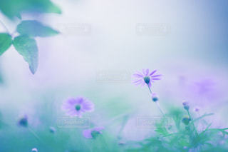 自然の写真・画像素材[571246]