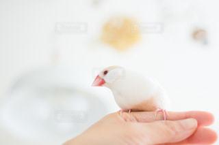 No.579934 鳥