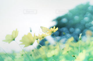 幸せを運ぶキイロの蝶の写真・画像素材[794679]