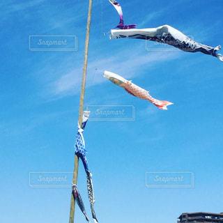#空#鯉のぼり#空が好き #あおぞら #空が好きな人と繋がりたい #からまるの写真・画像素材[528754]