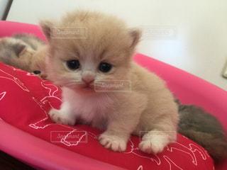 仔猫の写真・画像素材[507903]