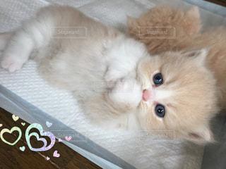 猫 - No.515681