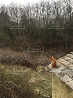 猫の背中の写真・画像素材[742925]
