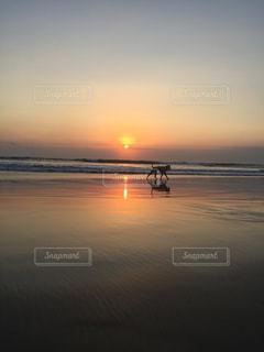 夕日と犬の写真・画像素材[2184183]