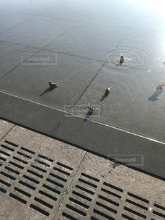 すずめの水遊びの写真・画像素材[2211113]