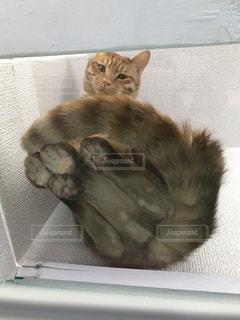 下から猫を撮影の写真・画像素材[2215571]