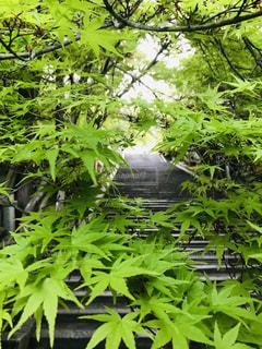 お寺の階段の写真・画像素材[3107194]