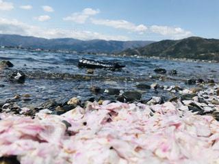 桜と琵琶湖の写真・画像素材[3107181]
