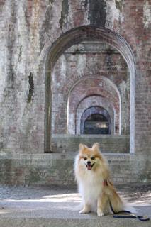 レンガ造りと愛犬の写真・画像素材[3107204]