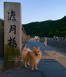 観光地巡りの愛犬の写真・画像素材[3107206]