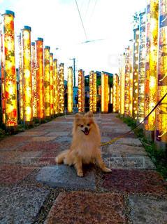 観光地を巡る愛犬の写真・画像素材[3107209]
