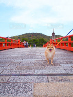 観光地巡りの犬の写真・画像素材[3107207]