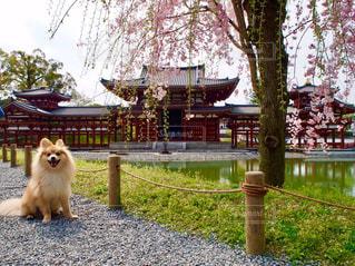 観光地巡りの愛犬の写真・画像素材[3107208]