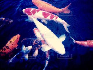 No.508300 魚