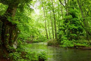 自然の写真・画像素材[508323]