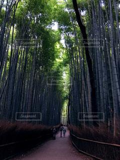京都の写真・画像素材[606275]