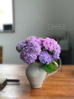 #紫陽花の写真・画像素材[541039]