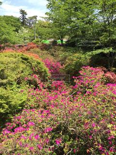 風景 - No.520861