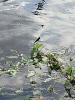 川の写真・画像素材[520879]
