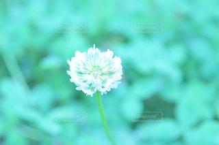 花 - No.509432