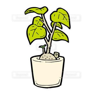 観葉植物の写真・画像素材[2501101]