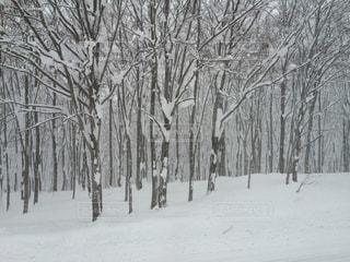 木の写真・画像素材[510600]