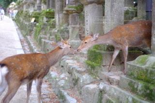 目と目があう鹿の写真・画像素材[2778040]