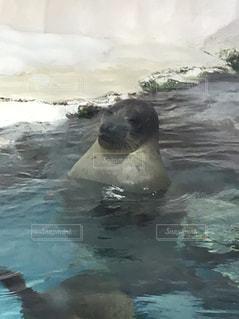 海遊館の写真・画像素材[509702]
