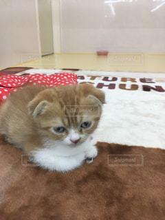 猫の写真・画像素材[509735]