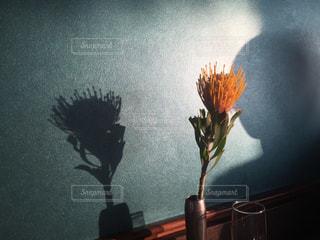 花の写真・画像素材[509743]