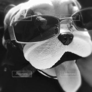 犬の写真・画像素材[513772]