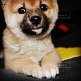 No.570347 犬