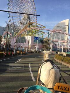 馬の写真・画像素材[511444]