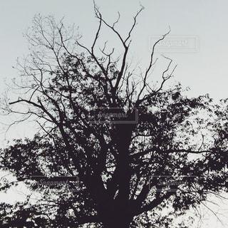 木 庭の写真・画像素材[510478]