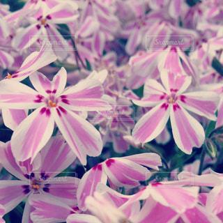 自然 花 木 庭の写真・画像素材[510509]