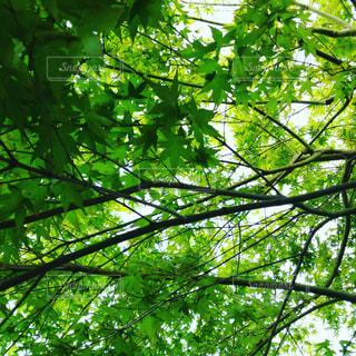 自然 花 木 庭の写真・画像素材[510510]