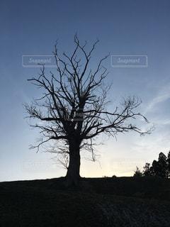 夕日からのシルエットの写真・画像素材[1079407]