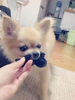No.510329 犬