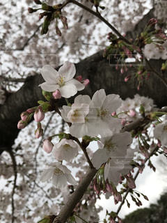 春の写真・画像素材[511965]