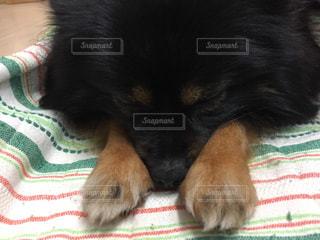 犬の写真・画像素材[521986]