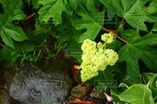 植物の写真・画像素材[588293]