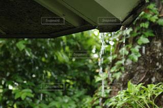 雨 - No.588295