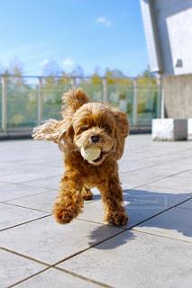 犬の写真・画像素材[510825]