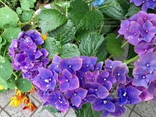 花の写真・画像素材[516568]