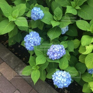 花の写真・画像素材[16334]