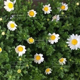花の写真・画像素材[21787]