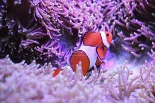 魚の写真・画像素材[34492]