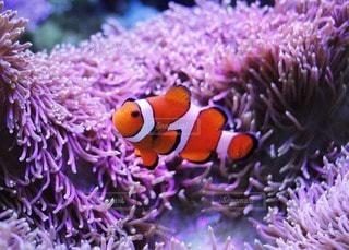 魚の写真・画像素材[34493]