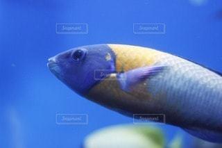 魚の写真・画像素材[39123]