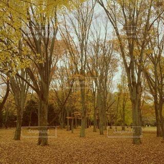秋の写真・画像素材[47261]